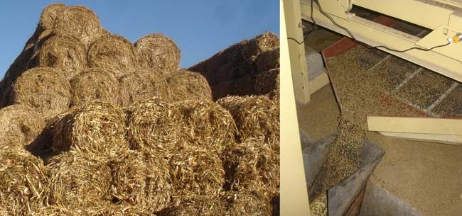 straw and straw pellets